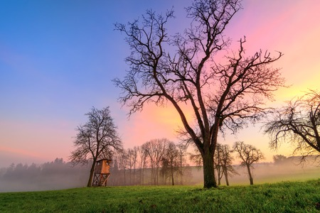 Rural landscape at sunset, with beautiful different colors in the sky, bare trees and mist on the meadow