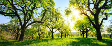 Beautiful panoramic green landscape in spring or summer, with trees in a row on a meadow and the sun shining bright Imagens