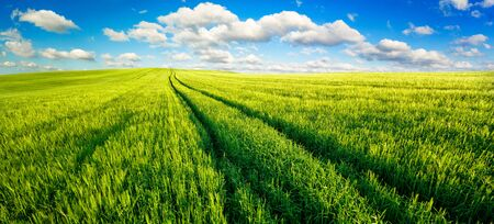Panoramic landscape with idyllic vast green fields, nice blue sky and fluffy white clouds Stock fotó