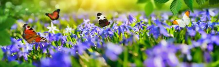Joyful little paradise with blue bells on a green meadow in spring, with butterflies flying around, panorama Banco de Imagens
