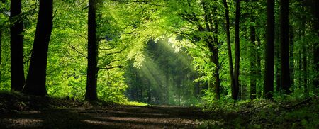 Panoramic forest scenery with green branches shaping a natural archway Stock fotó