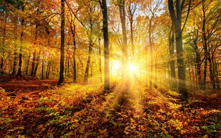 The sun creating a magical autumn scenery in a beautiful forest