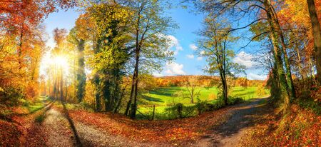 Gorgeous panoramic landscape showing a meadow and a path leading into a forest, with autumn colors, the sun and blue sky Stock fotó