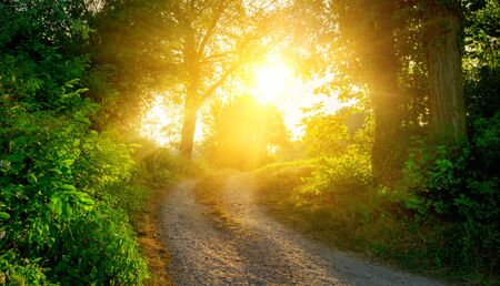 Rural scene with a path warmly illuminated by the  golden sunlight and leading to the sun Stock fotó