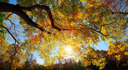 The sun casting its rays through the colorful autumn foliage of a tree over the blue sky