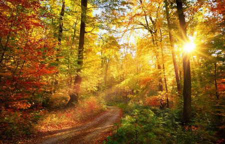 Colorful autumn landscape with a path lit by the sun shining through the foliage Standard-Bild