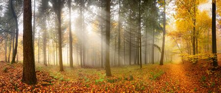 Misty autumn forest with beautiful rays of soft light falling through trees unto a leaves-covered footpath Stock fotó