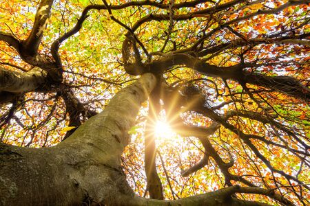 The autumn sun shining through the crown of a tree with visually impactful branches
