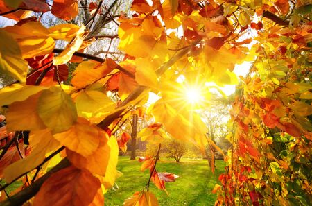 Sun rays falling through branches with gold and red autumn foliage in a park Stock fotó