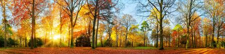 Panoramic colorful autumn scenery in a park, the sun casts beautiful rays through the foliage