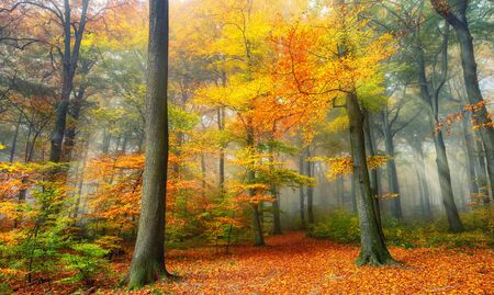 Misty forest in autumn, with beautiful warm colors and cool, soft light falling through the foliage into a clearing
