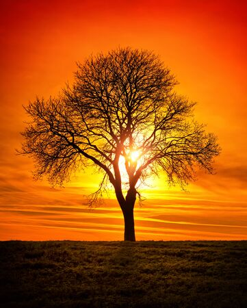 Bare tree on a field in front of the sun, with a vivid red sky, portrait format Archivio Fotografico