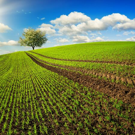 Trails on a field with young plants leading to a lone tree on the horizon. Landscape in square format with a green hill and blue sky