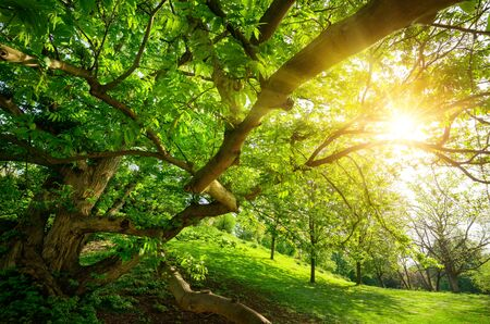 The enjoyable warm sun seen from under a tree in the park, with a meadow and lots of green foliage