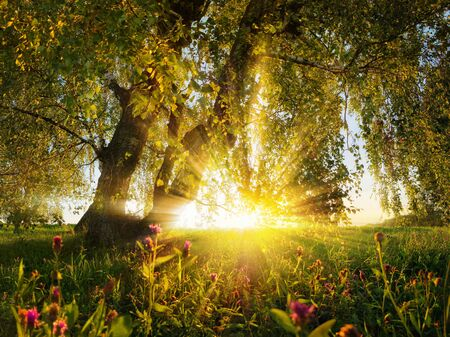 Gorgeous rural landscape sunset scenery on a meadow seen from under a tree, warm gold color mood