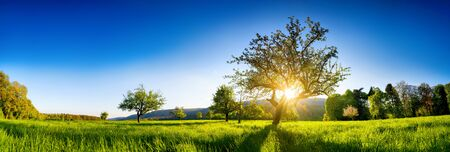 The sun shining through a tree on a green meadow, a panoramic vibrant rural landscape with clear blue sky before sunset