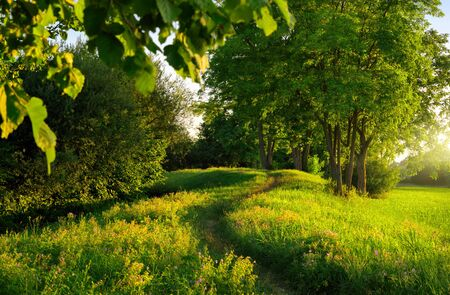 Narrow footpath leading through beautiful sunlit meadow and green trees, creating curvy lines