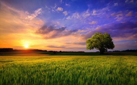 Sunset scenery on an open field with a lone tree on the horizon and the sky painted in gorgeous dramatic and emotional colors