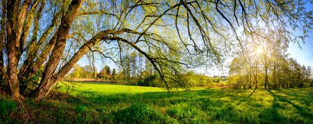 Rural landscape panorama with the morning sun shining through the hanging branches of a beautiful old willow tree, blue sky in the background