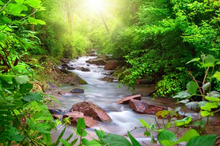 Beautiful stream flowing through a green forest, framed by vibrant foliage, with sun rays illuminating the scene from above Archivio Fotografico