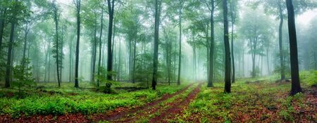 Dreamy forest panoramic scenery with a path inviting to take a relaxing walk, with beautiful soft light and fog