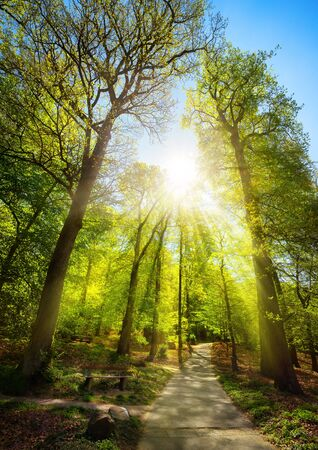 Bright sunrays beautifully falling through the trees of a park, with a path leading uphill towards the sun