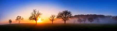 Extra wide sunset panorama, a minimalistic beautiful landscape with a few bare trees and wafts of mist, deep blue sky and vibrant colors of the sun