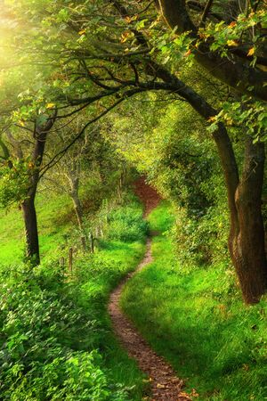 Curved footpath leading through vibrant green grass framed by beautiful branches of trees