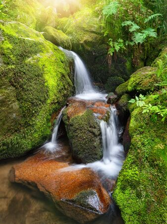 Mountain creek with beautiful miniature waterfalls flowing through moss-grown rocks of a forest