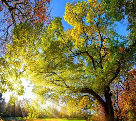 Colorful landscape shot of gorgeous trees in a park, with blue sky and the sun rays falling through the branches