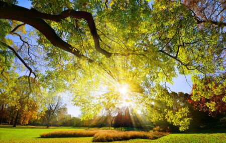 The sun casting its bright rays through the majestic large branch in a park on a cloudless day