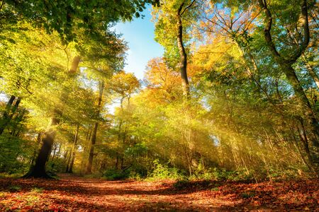 Colorful autumn forest landscape with warm sun rays illumining the foliage and a path leading through the trees Archivio Fotografico