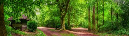 Tranquil forest scenery: a panorama of trees and paths in vibrant green color and soft sunlight, with a small cabin
