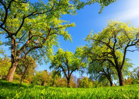 Beautiful panoramic green landscape in spring or summer, with trees in a row on a meadow and the sun shining bright Archivio Fotografico