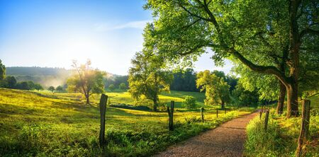 Rural landscape with a path, trees and meadows on hills, blue sky and pleasant warm sunshine from the low sun Reklamní fotografie