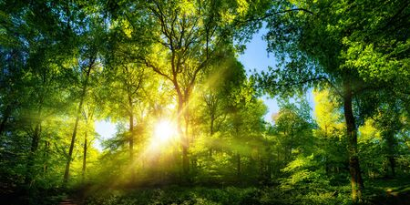 Vivid scenery of beautiful sunlight in a lush green forest, with vibrant colors and pleasant contrast