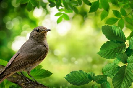 Bird on a branch and green foliage framing a beautiful bokeh nature background Archivio Fotografico