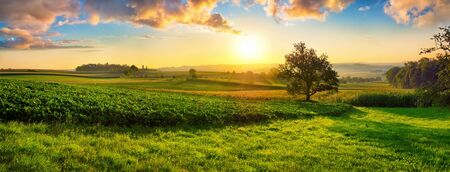 Tranquil panoramic rural landscape scenery in an early summer morning after sunrise, with a tree on green meadows and colorful clouds in the gold and blue sky Reklamní fotografie