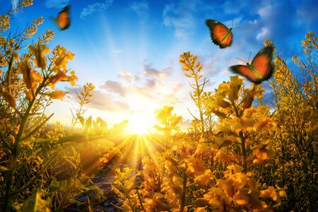 Bright rural sunset seen through blossoms on a meadow, with butterflies roaming in the air and deep blue sky