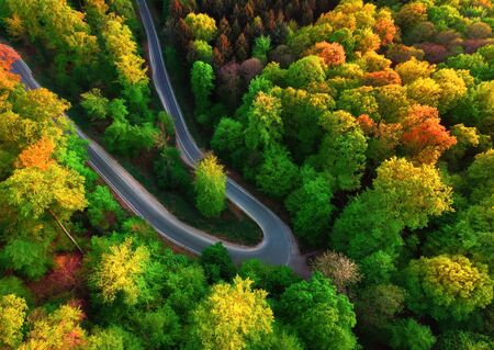 Colorful aerial landscape downward shot with the view of a road bend in a beautiful forest with deciduous trees