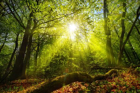 Dreamy green landscape scenery: a forest clearing with the sun shining through green foliage Reklamní fotografie