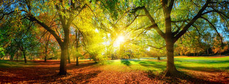 Colorful panoramic autumn landscape in a scenic park. The sun is positioned in the middle and casts beautiful rays through the foliage