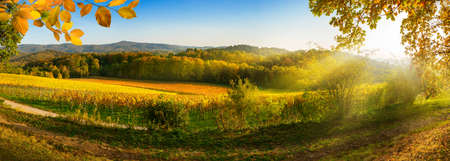 Panoramic rural landscape in autumn with vineyards, hills, vibrant blue sky and rays of sunlight, framed by gold foliage