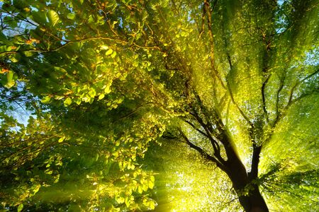 Majestic rays of light dramatically illuminating the branches and foliage of a tree, with the sun behind the silhouette of the trunk Reklamní fotografie