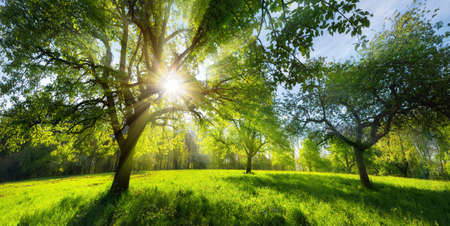 Beautiful green rural landscape in spring or summer, with trees on a meadow and the bright sun shining through the foliage Reklamní fotografie