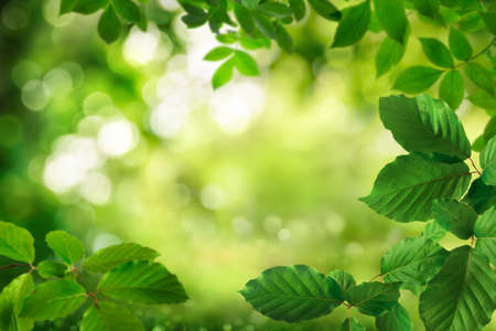 Green foliage framing a beautiful bokeh nature background with the shimmering leaves as bright highlights