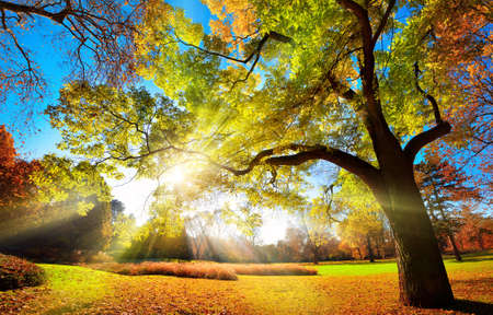 Colorful autumn landscape shot of a gorgeous tree changing foliage colors in a park, with blue sky and the sun rays falling through the branches Reklamní fotografie