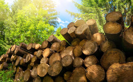 Forestry industrial shot in nature: pile of felled tree trunks in a green forest on a beautiful sunny day