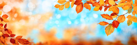 Colorful autumn background in panoramic format, with red and gold leaves framing the blue bokeh highlights