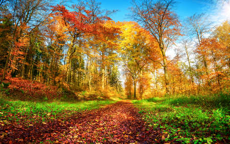 Forest scenery in vibrant autumn colors, with a path covered in red foliage and framed by green herbs, blue sky and colorful trees